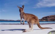pogoda Australia
