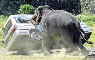 Słoń VS Samochód