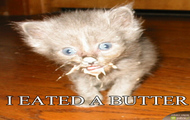 Kotek i masełko