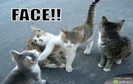 Kotki koteczki