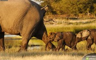Kupa slonia xD