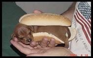 hot dog xxxxx
