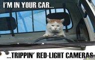 Koci kierowca