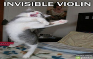 kot i jego niewidzialne skrzypce