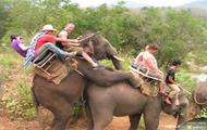 Na słonia
