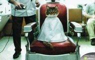 Kot u fryzjera