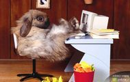 komputerowy królik