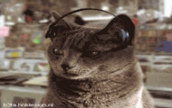 Dj Kot 5