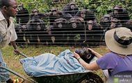 szympansica Dorothy