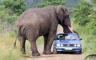 Atak słonia
