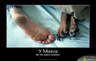 9 Marca - demot