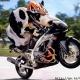 krowa 15
