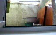 Kot z Incepcji