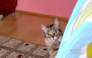 Kot o złym spojrzeniu