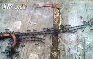 Sprytne mrówki