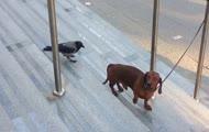 Ptak vs. jamnik