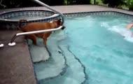 Pies uczy się pływać
