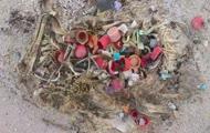 Dlaczego nie wolno śmiecić na plaży...?