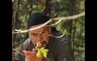 Dzikie i smaczne: szybkie przekąski z lasu