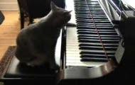 pianista.kotek