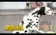 Pies jeździ na rowerze