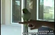 mądra papuga