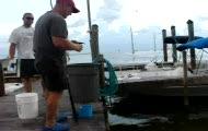 rybka na swieta