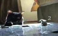 Pomysłowa zabawka dla kota