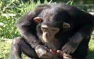 małpa.gg 7979635