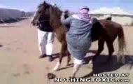 Gruby arab + koń