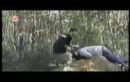 Videos part 111