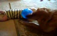 Pies + dziecko = wielka radocha