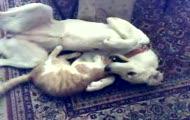 pies z kotem x