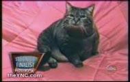 Szalony kot (wixa)