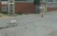 Reakcja kota na nieudane polowanie