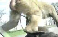 Polacy spotykają dwie miłe małpki