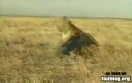 niudane polowanie