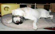psy i koty kompilacja slodziakow