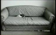 smieszne kotki