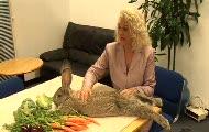 Największy królik świata
