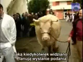 Krowa-potwór